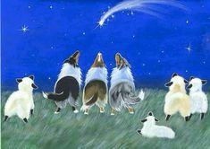 Christmas Collies - There were shepherds abiding in the field, keeping watch over their flocks by night.