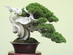 Bonsai ⛰ More At FOSTERGINGER @ Pinterest