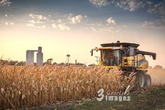 Harvest time in the midwest, a yellow New Holland combine harvesting corn with the Nebraska skyscrapers in the background. #farming #ag #agriculture