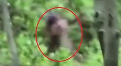 Campeurs, Bigfoot et femelle…