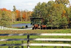 "Check out my art piece ""Coralled"" on crated.com Puslinch Ontario Canada #horses #art #photography #autumn"