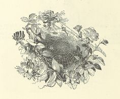 Image taken from page 30 of 'Illustrated Poems and Songs for Young People. Edited by Mrs. Sale Barker'   Flickr – Condivisione di foto!