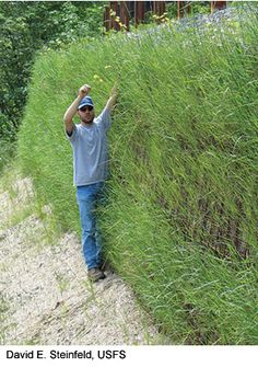 A researcher stands beside a gabion wall that was revegetated using a seeded erosion blanket.