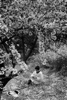 Magnum Photos - Burt Glinn JAPAN. Woman among cherry trees.1961