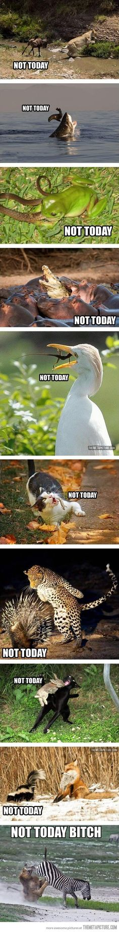 Animals that said 'Not Today':