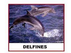 los delfines para niños - Buscar con Google