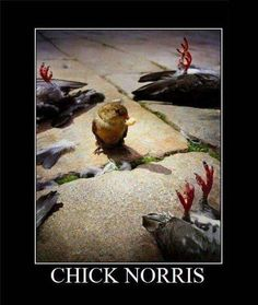 Chick Norris: Chuck Norris extends beyond humans :D Clean Funny Pictures, Funny Images, Funny Photos, Chuck Norris Funny, Chuck Norris Facts, Funny Birds, Funny Animals, Garden Bird Feeders, Funny Puns