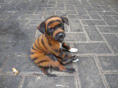Tiger Dog Puppy