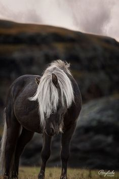 Island Fotografie Pferd - #fotografie #island #pferd