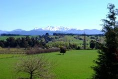 New Zealand Farmland Scene, Moutere. Nelson New Zealand, Royalty Free Images, Scenery, Stock Photos, Pictures, Photography, Photos, Photograph, Landscape