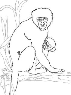 Coloring Pages Nature Animals Coloring Pages