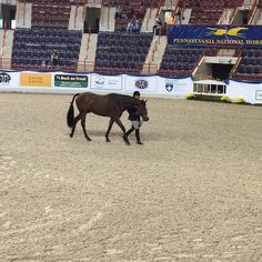 Congratulations to Jennifer Alfano and THE EXCHANGE  from Sbs Farms Inc. who received the blue ribbon in the first of two Pre-Green Hunter 3' over Fences! #70thPNHS #pnhsfoundationday