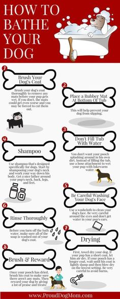How To Properly Give Your Dog A Bath [infographic]