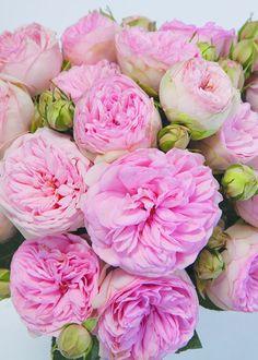 Bridal Piano Deluxe Garden Rose bouquet
