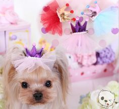 luckyBEAR 3 PCS Adorable Handmade Pet Dog Hair Bow Tie Crystal Dog Grooming Accessories Boutique Hair Clips ForLittle Pet Dog Stlye 2 *** You can find out more details at the link of the image. Dog Hair Bows, Dog Bows, Pet Puppy, Pet Dogs, Dog Cat, Poodle Hair, Little Live Pets, Dog Training Pads, Pet Fashion