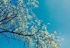 himmel, heaven, tree, baum, cherry, kirsche, sommer, sonne, sun, summer, nature, natur