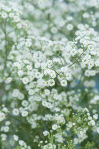 The perennials top 10 of picking flowers - GroenVandaag Balcony Garden, Garden Beds, Garden Plants, Green Garden, Lawn Care, Flower Beds, Garden Planning, Garden Inspiration, White Flowers