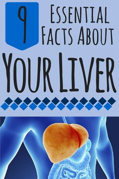 9 Essential Facts About Your Liver: Answers to common questions about one of your body's most important, and largest, internal organs #liver #facts | everydayhealth.com