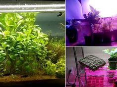 Build your own DIY LED Grow Light Panels at a cheap cost to start seed and grow your plants indoors without sunlight. Succulents Diy, Planting Succulents, Garden Plants, Rockery Garden, Indoor Succulents, Veg Garden, Bonsai Plants, Outdoor Plants, Garden Landscaping