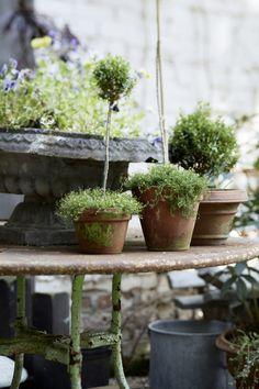 the red chair courtyard garden | gardenista