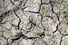 Sää on ollut monin paikoin kuiva tänä vuonna.