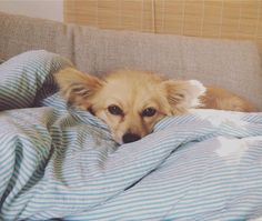 Malou Rescue/street dog from Greece | Pawshake Berlin