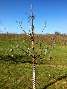 26.03.2016 - Was für ein wundervoller Tag! Das Wetter habe ich gleich mal genutzt, um einen langen Spaziergang zu machen und habe diesen Baum mit seinen seltsamen Früchten entdeckt. Was das wohl ist?