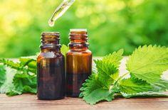 Jakie właściwości ma pokrzywa Water Bottle, Herbs, Drinks, Food, Magick, Drinking, Beverages, Essen, Water Bottles