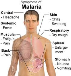 What causes malaria on the lips How to treat this insidious virus