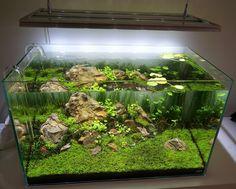 Layout par Axelwin. #aquascaping #fishtank #aquarium