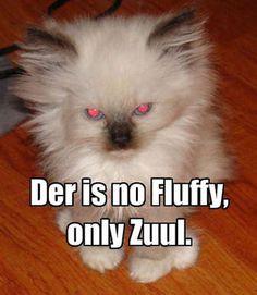 Only Zuul...