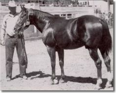 The famous stallion Royal King was purchased for the princely sum of $250 all the way back in 1944. Royal King went on to have a long and distinguished career as a cutting horse, and later as a sire of performance champions. In fact, Royal King was so good at passing his cow-horse talents on to his offspring that 12 out of the first 13 foals he sired went on to earn the distinguished Register of Merit with the AQHA organization through approved competitions.