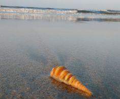 #tarkarli #beach #Konkan Maharashtra India