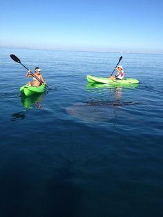 Snell Real Estate captures photos of the whale sharks right off the beach in La Paz. You can see in this photo they were swimming amongst a couple kayaking! #lapaz #whale #sharks #snellrealestate