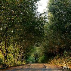 Büyüklü, Sarıyurt, Yeşilyurt Villages Wather and Tree, Clouds