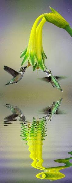 Flying Reflection - Favorite Photoz