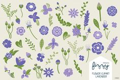 lavender illustration - Google Search