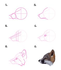 How to Draw a Realistic Wolf, Draw Real Wolf, Step by Step ...