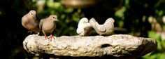 doves in our garden....