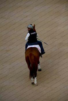 California Chrome in Dubai Horse Racing, Race Horses, Preakness Stakes, Poker Night, Sport Of Kings, Thoroughbred Horse, Chrome, History, Mornings