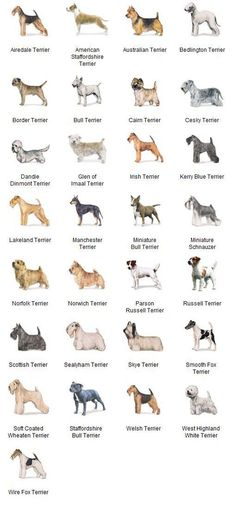 AKC Breeds by Group - Terrier Dogs 5 of 7