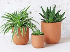 These terracotta plant pots is a great way to bring outdoors indoors. If you are looking to create a global nomad style in your home, the plant pots are a great place to start! #plants #indoorplantpots #plantpots #homestyle #homeinteriors #globalnomad