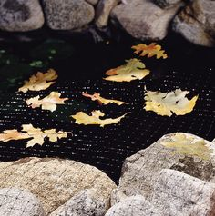 Laguna Pond Netting - Protects Koi From Pond Predators and Stops Leaves From Going In Pond