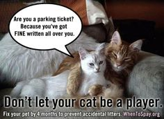 Don't let your #CAT be a player!  #spay #neuter