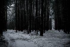 https://flic.kr/p/r1EJ5Y   Forest crossroads