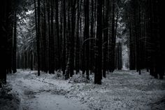 https://flic.kr/p/r1EJ5Y | Forest crossroads