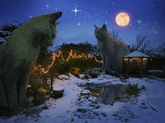 Night time in the Land of The Topiary Cat