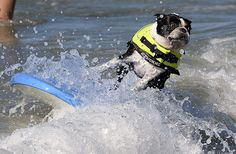 Fifth annual Surf City surf dog competition in California.