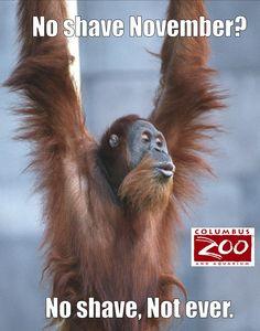 Columbus Zoo (@ColumbusZoo)   Twitter