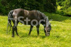 #horse #grazing royalty-free stock photo #microstockita